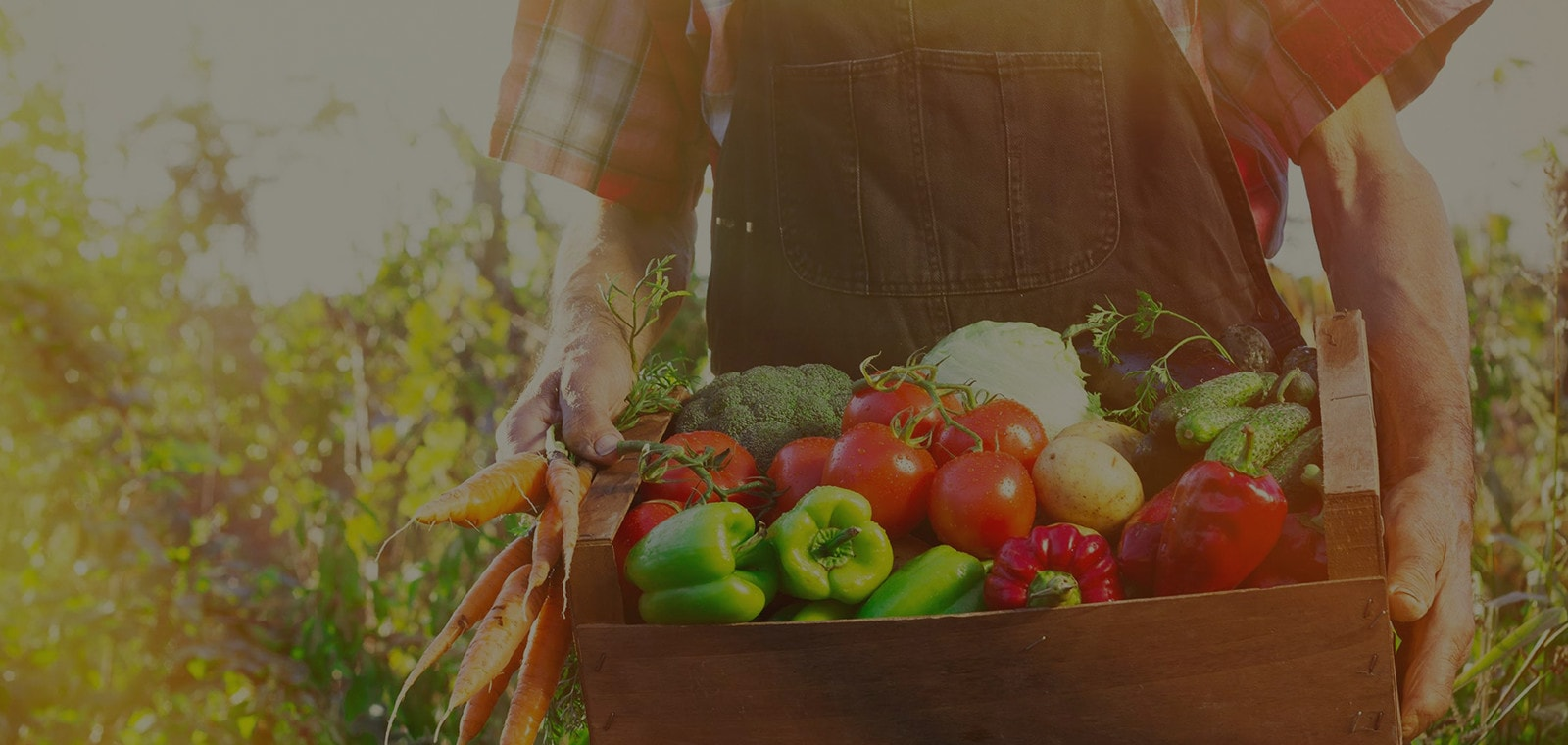 агрофирма партнер семена каталог 2020 официальный